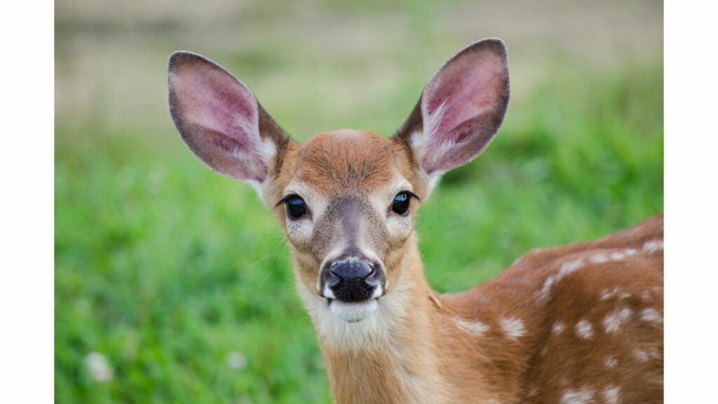 A Missouri boy was out hunting deer when he spotted a thief on a friend's farm. The intruder got into an argument with the boy's father and the boy ended up shooting him with an arrow. The intruder died on the scene. (Credit: Shutterstock.com)