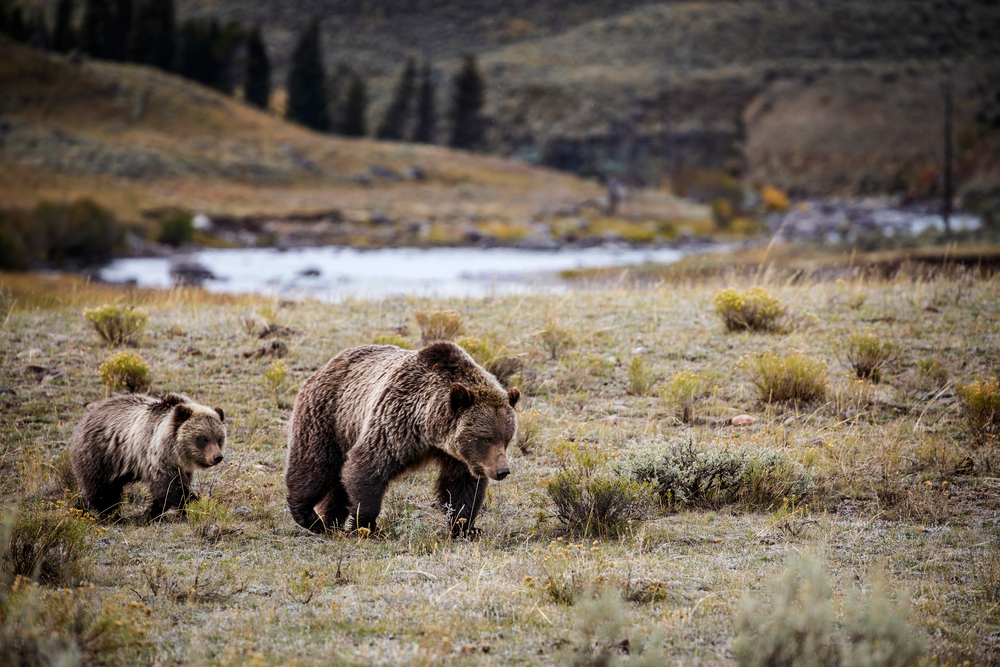 Samantha Dehring Gets Jail Time For Coming Too Close to a Grizzly Bear